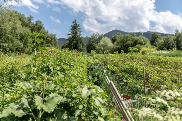 Acker-Gemüse-Berge