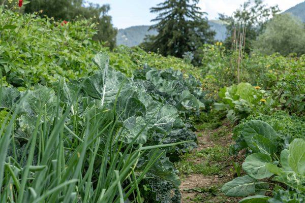 Acker-Gemüse-Natur-Berge
