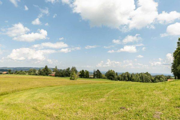 Felder-Wiese-Wald
