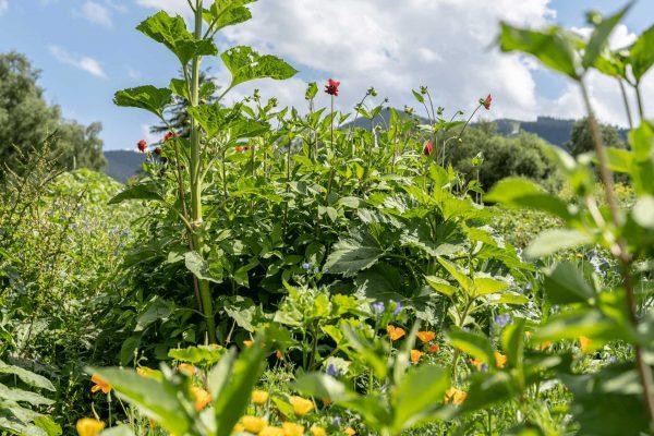 Hotel-Acker-Gemüse-Blumen