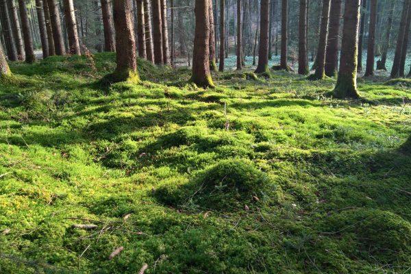 Wald-Natur-Bäume-Waldbaden